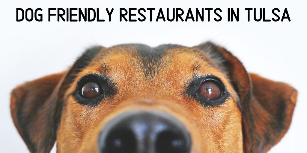 We love opening our doors to you and your furry family members. We're excited that so many Tulsa restaurants do too! Our list of dog friendly restaurants include:Wild Fork, Queenie's Cafe, Roosevelt's, Andolini's, Freckles Frozen Custard, Docs Wine and Food, Tally's Good Food Cafe and more!