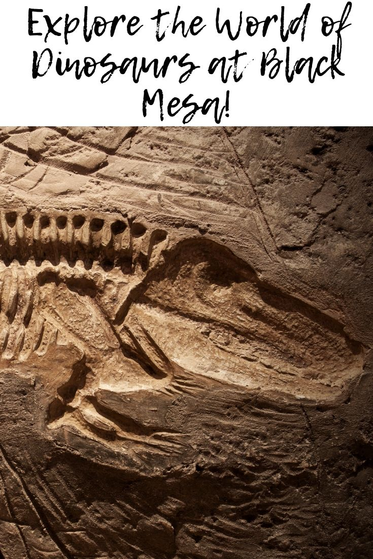 Want proof dinosaurs existed? Hike to the summit of Oklahoma's highest peak at Black Mesa,located in the Oklahoma panhandle.While there, view authentic dinosaur tracksthat are preserved in the creek beds.