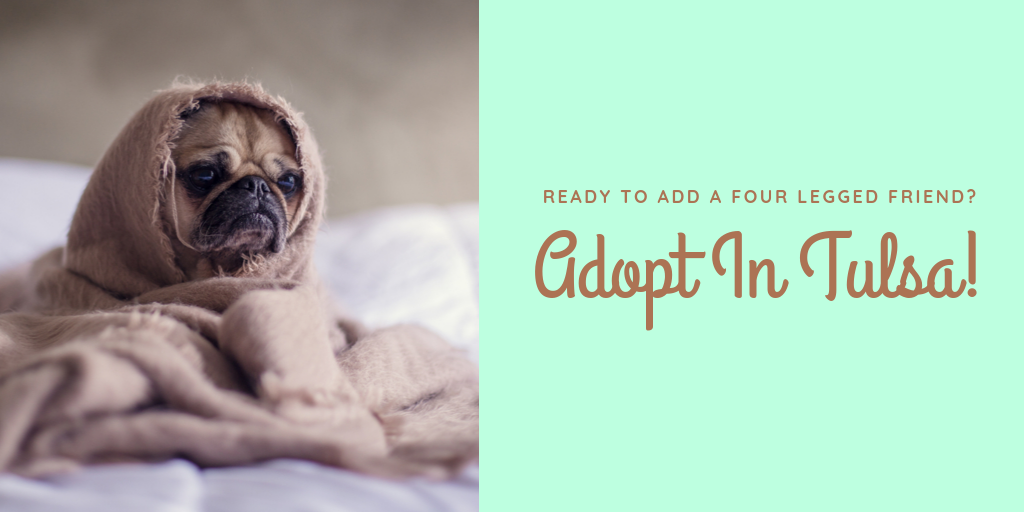 If you feel you are ready to adopt a four legged friend to your family, use the opportunity to adopt in Tulsa!