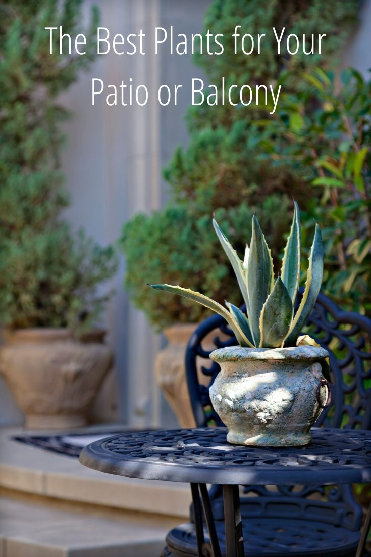 When you are looking to spruce up your patio or balcony here are some plants that will do the job well! You can change up the look of your apartment decor with just a few simple plant changes. Here are some options for apartment plants that will help you decorate and help you fall in love with gardening.