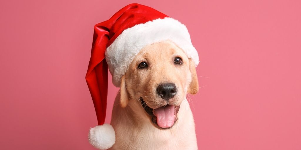 Looking for a holiday activity that both your and your dog can enjoy? The Jingle Bell Run is the original festive race for charity and it's 100% dog friendly! This Tulsa living activity is not one you will want to miss!