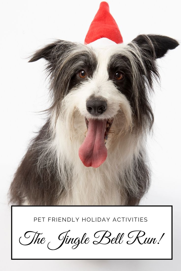 Looking for a holiday activity that both your and your dog can enjoy? The Jingle Bell Run is the original festive race for charity and it's 100% dog friendly!
